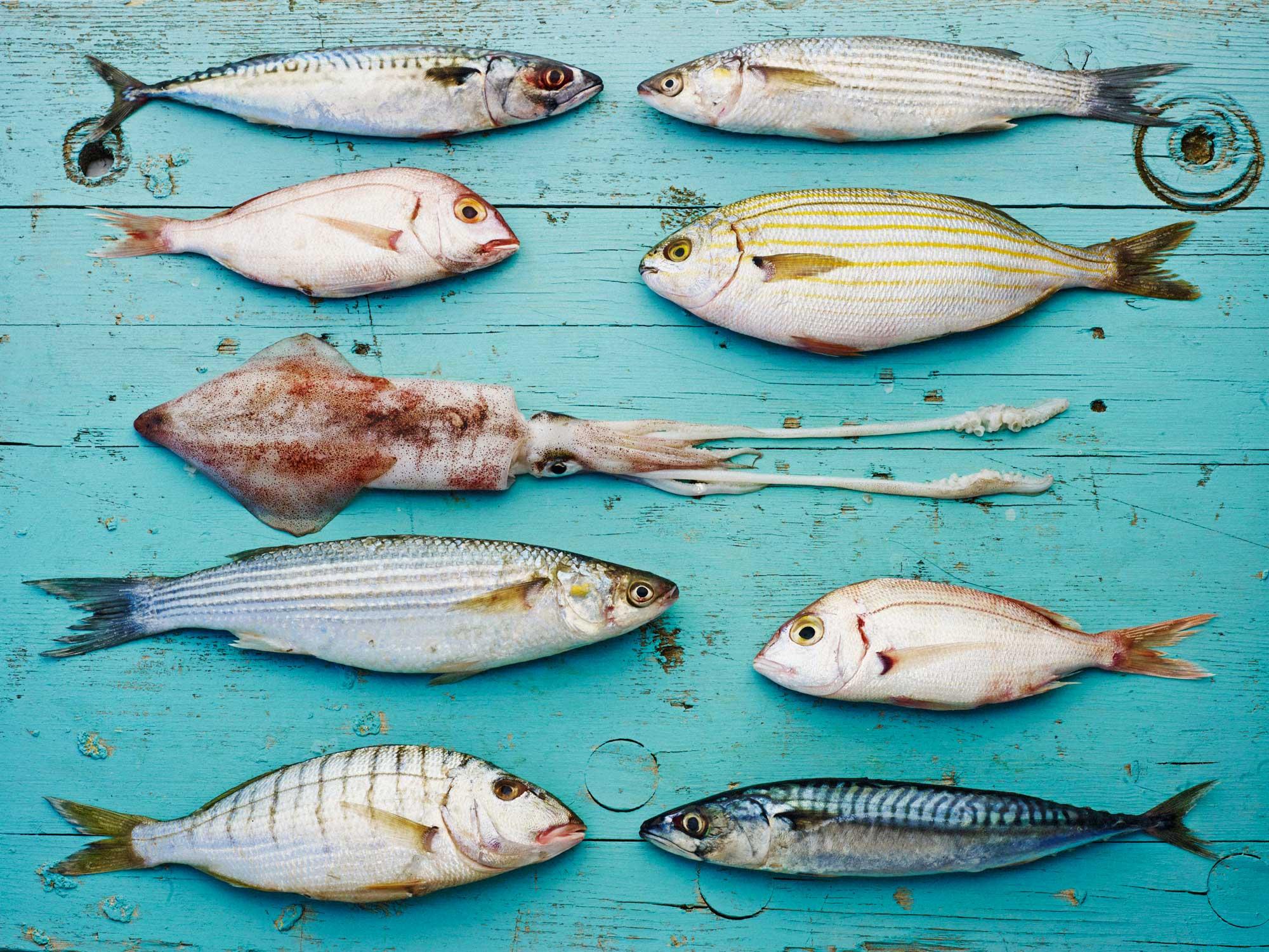 Na morje z ribiči