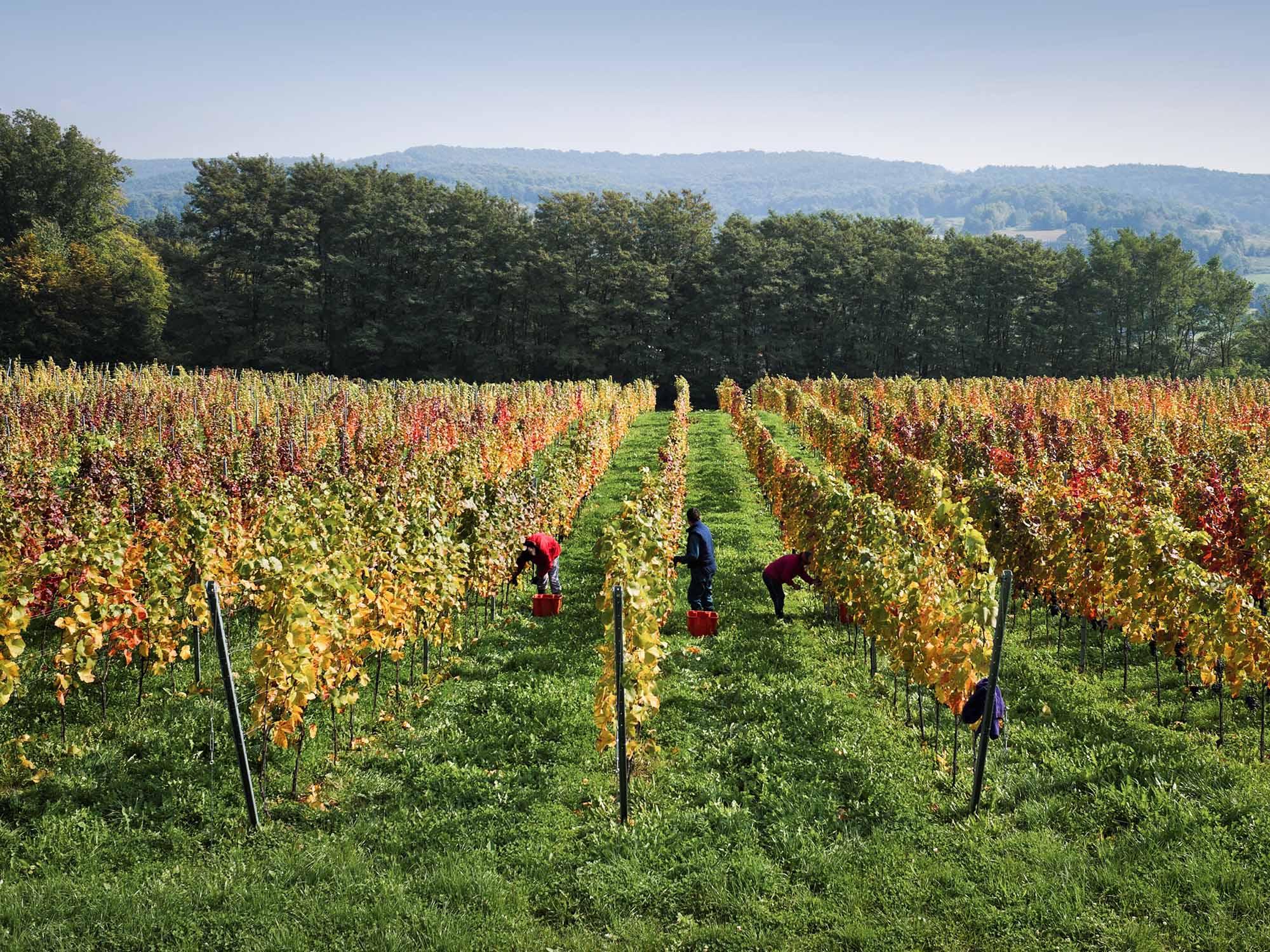 vinska klet Marof