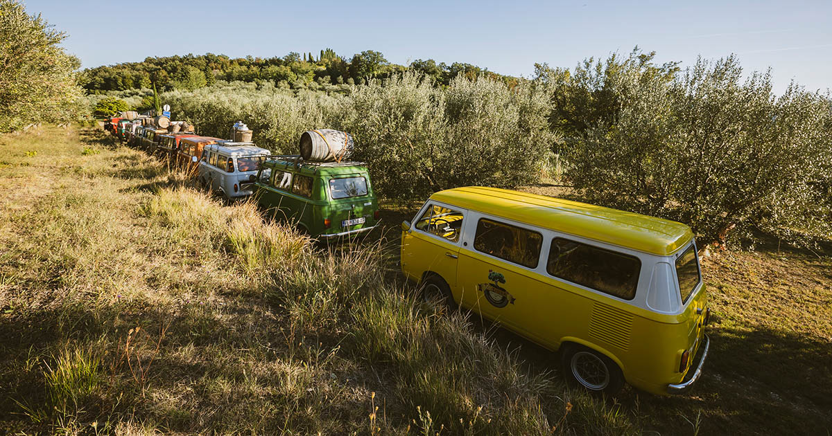 Taking an old-timer to discover the story of istrian olive trees