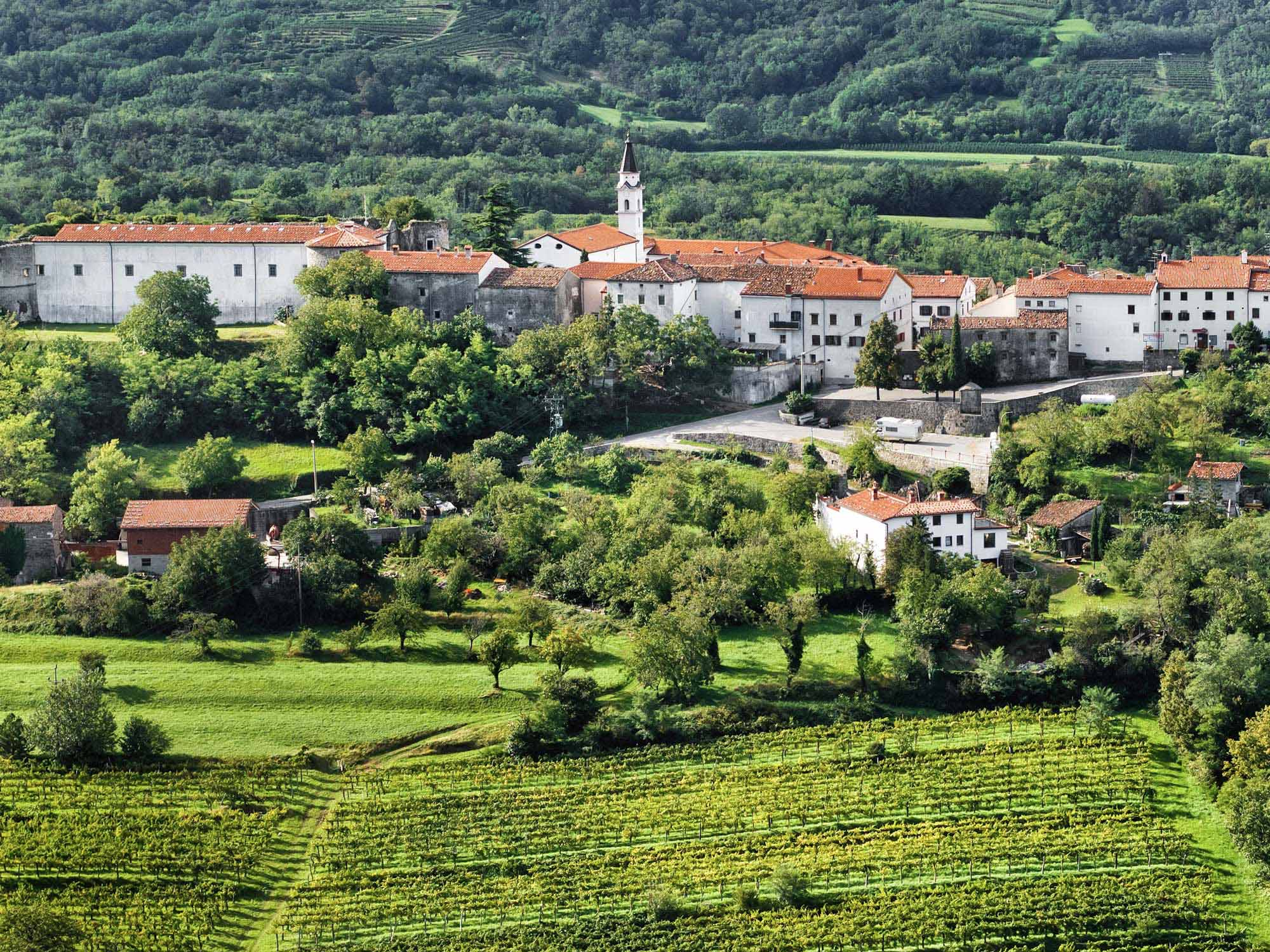 Discover the unique flavours of the Vipava Valley
