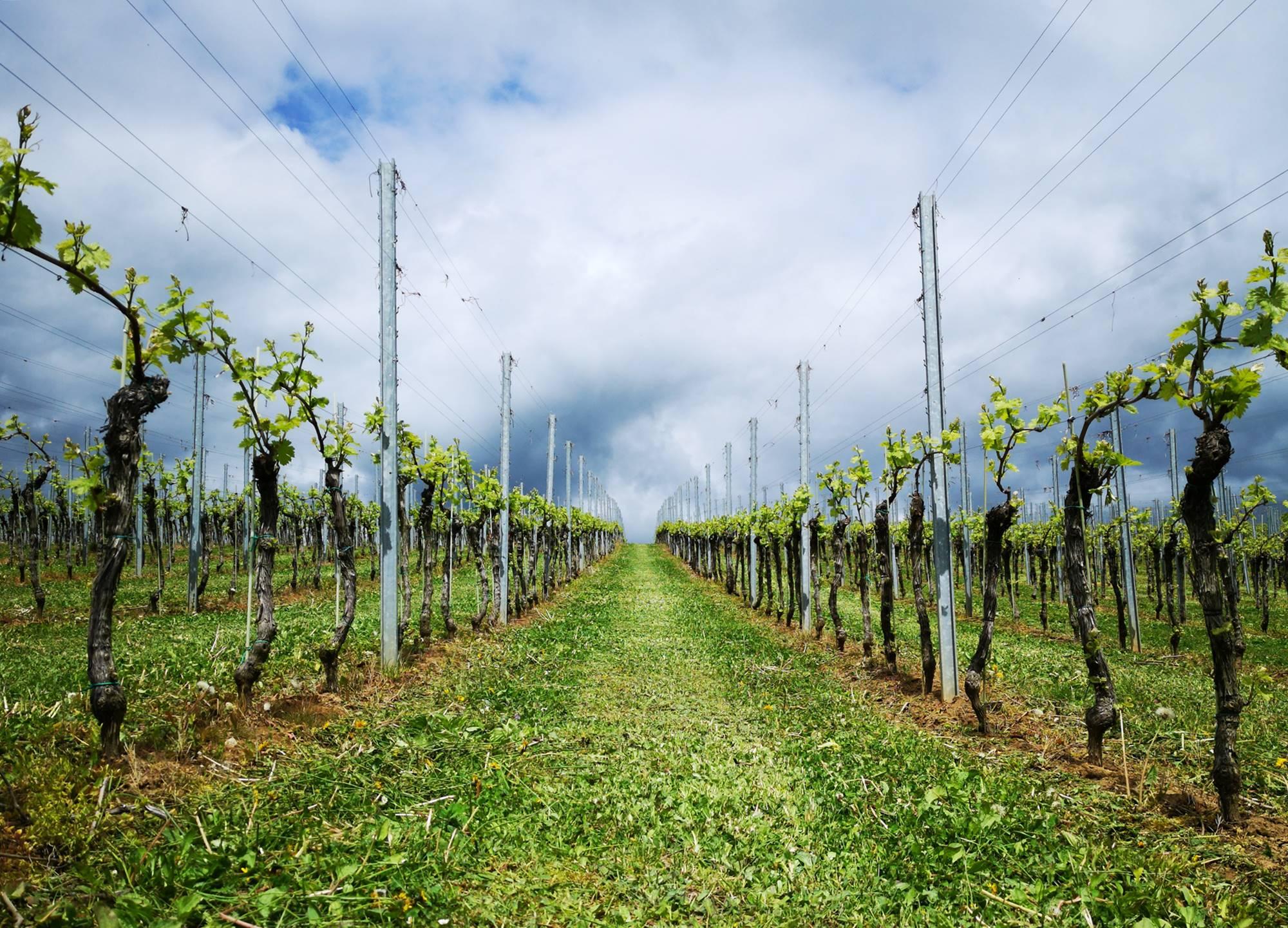 Nova vinska smer v osrčju Dolenjske