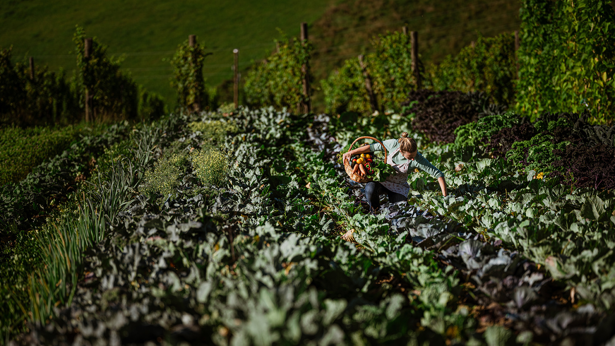 Butična kmetija v osrčju pohorskih strmin
