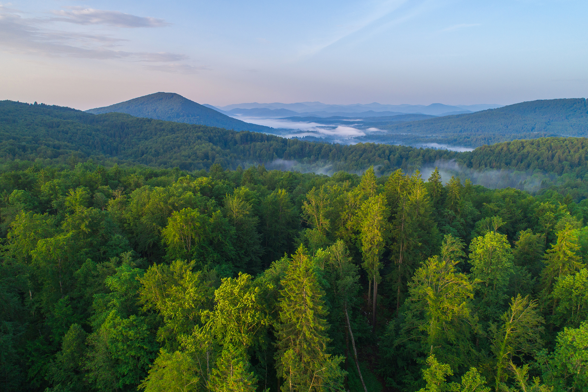 kočeve forest from the air