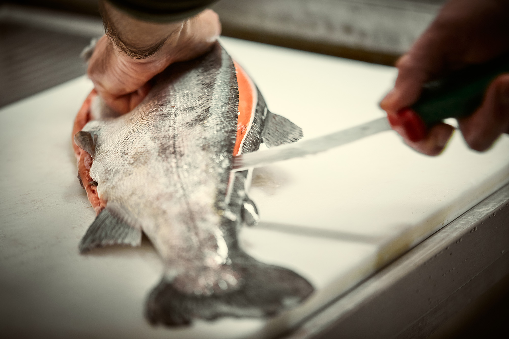 trout being filleted