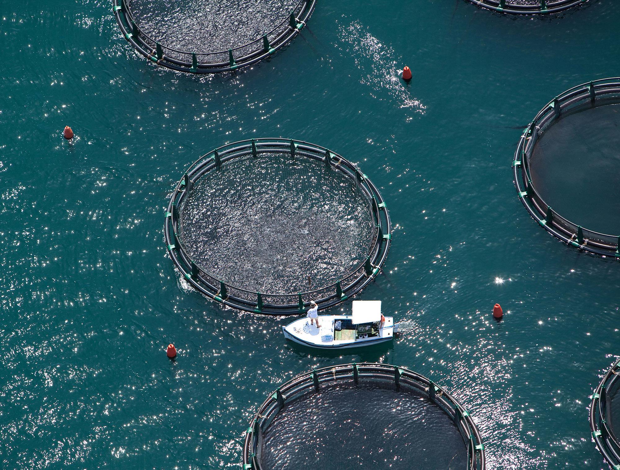 organic fish farm